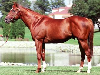 アグネスデジタル産駒の特徴・種牡馬・口取りなど