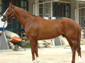 ディープスカイ産駒の特徴・種牡馬・口取りなど